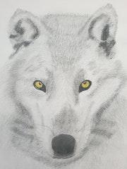 Le Loup Blanc.