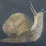 L'Escargot. Elwan Gété