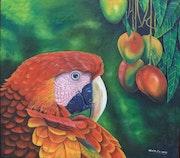 Guacamayo y mangos. Olvin Ferrera