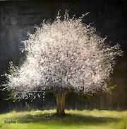 «Spring»; Un amandier fleurs. Sophie Duplain