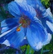 Pavot bleu.