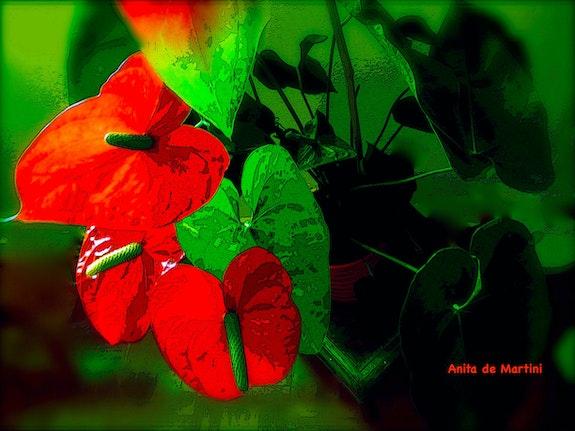 Anthurium Flower. Anita De Martini Anita De Martini