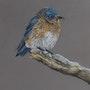 L'oiseau coloré. Patricia De Chadois