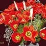 2021-01-27 Tulipes. Michel Normand