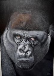 Gorille.