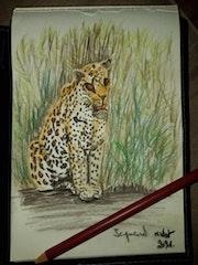Jaguardo Le jaguar. Mireille Vast
