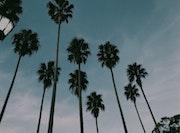 Palms. Abrilr