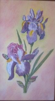 Iris bleu.