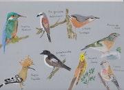 Planche d'oiseaux 2.