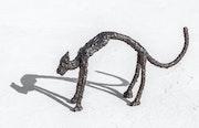 Serie gatos. Isaac Miralta