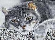 Chat- portrait. Ninon Cobergh