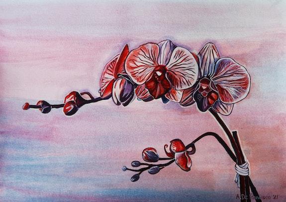 Orquídeas. A. De Francisco A. De Francisco