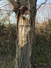 L'Esprit de l'arbre. Remy Provost