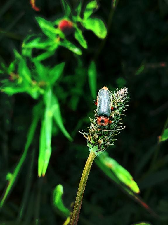 Une fleur à butiner. Aline Demarais Aline Demarais - Photographie