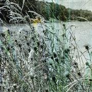 Dégradés au bord du Lac. Aline Demarais - Photographie