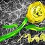 Ib -yellow rose. Allen Walker
