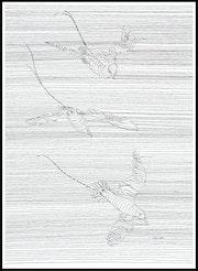Art en lignes, envol de pailles-en queue. Lanto R.