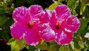 Цветы 0114. Fluidartfill