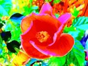 Arty tulip in the garden.