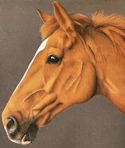 Portrait cheval. Ninon Cobergh