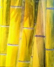 Bambous.