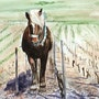 Le travail du cheval dans les vignes. Adyne Gohy