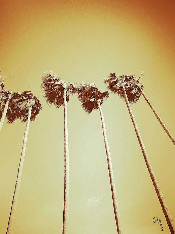 West Coast. Glenn Varez Glenn Varez