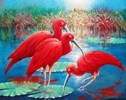 Ibis rouge Brésil. Elleditliane