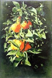 Naranjas en rama. Penya-Roja