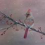 Le cardinal rose. Patricia De Chadois