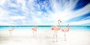 Flamingo, Poster digitale Kunst.