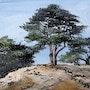 Quelques pins en Provence. Lise Buissart