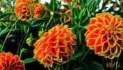 Цветы 018.