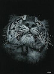 Tiger. Wpascal