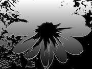 Fleur de l'ombre. Marie Loo