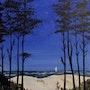 De la pinède vers la plage. Lise Buissart