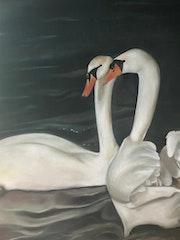 Swans of Brugge. Lucas Van Robays