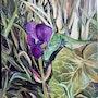 Iris. Florent V.