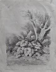 Étude d'après la nature, par Hubert..