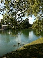 Oies bernaches chateau de Fontainebleau.