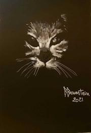 Chat dans la nuit. Bernard Brunstein