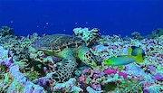 Подводный мир 002. Fluidartfill