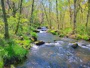 Paisaje de río, Lugo. M. Pilar