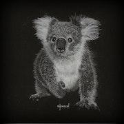 Koala. Wpascal