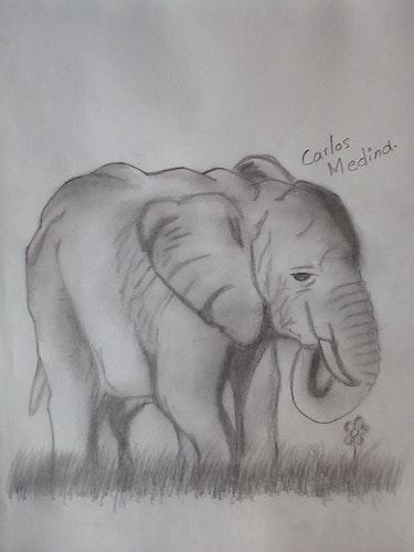 Elefante semirialista - Dibujo a lápiz. Carlos Alberto
