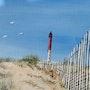 Phare de la Coubre vu des dunes. Lise Buissart