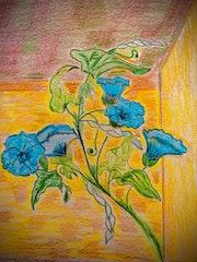 Le liseron bleu de St Sauveur.