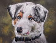 Portrait d'un berger australien. Ninon Cobergh