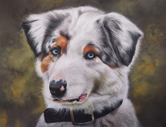 Portrait d'un berger australien. Ninon Coberg Ninon Cobergh