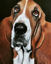 Portrait d'un basset hound. Ninon Cobergh